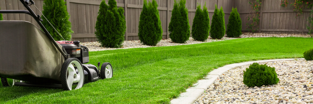 A Guide to a Vivacious Lawn