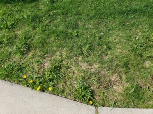 Repairing Your Lawns Salt Damage